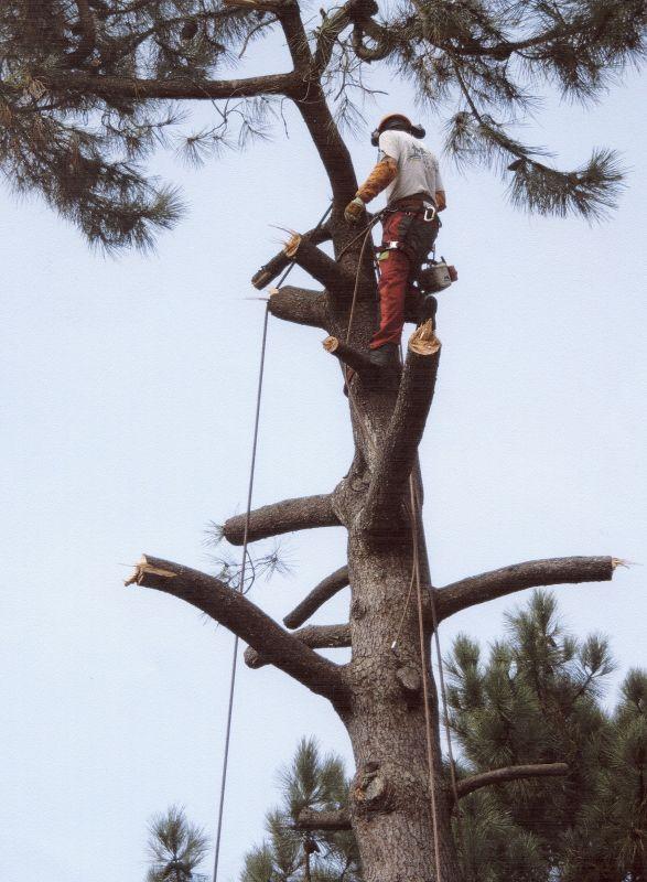 Coupe lagage et abattage d 39 un arbre dangereux la teste for Prix de l elagage d un arbre